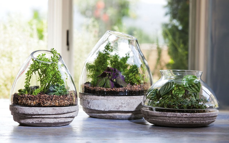 Get Your Kids Introduced To Terrariums Uaenurseries Ae